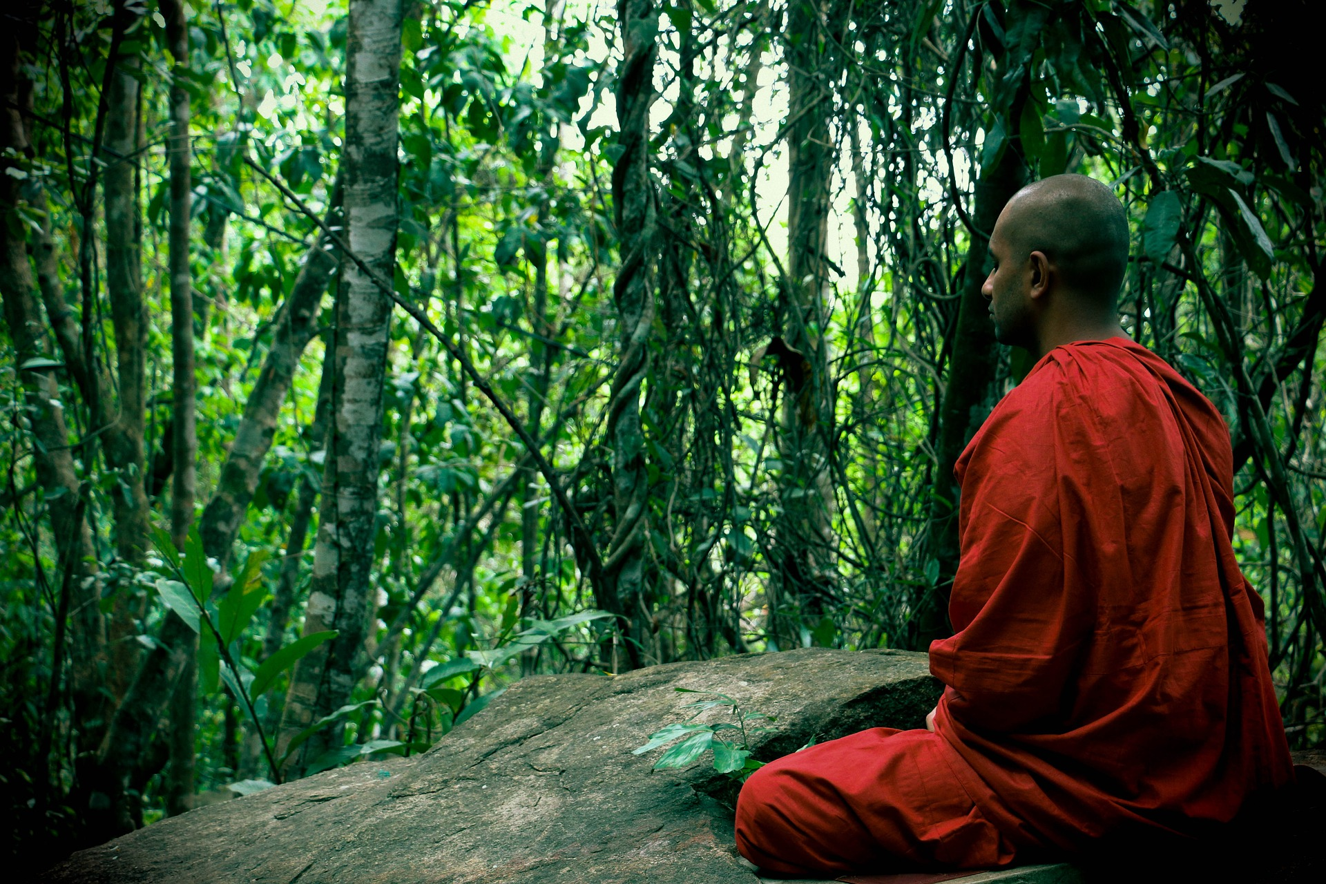 Monk Meditating in the Forest