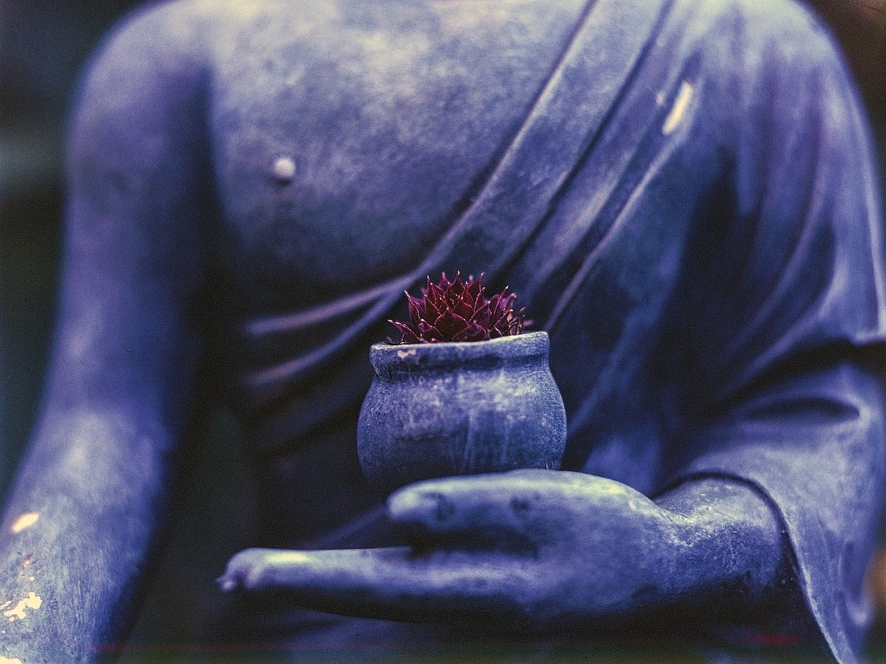 Buddha and a Flower (buddhahood)