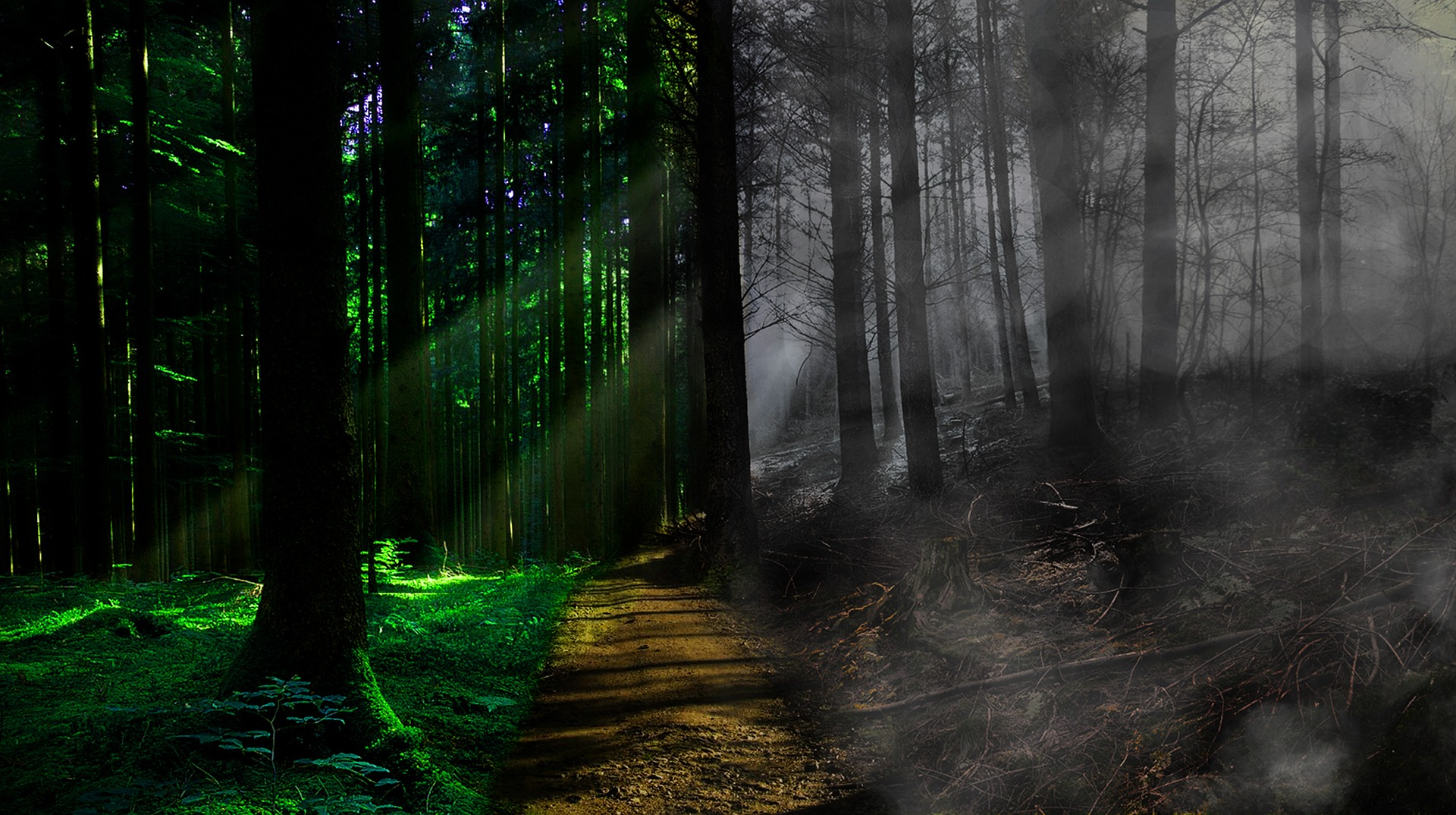 Dealing with fear of death the spiritual way (Life and death forest)