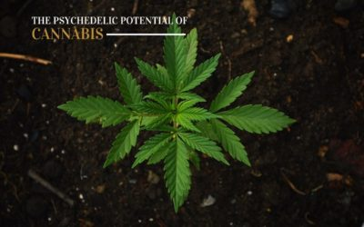 Discovering the Psychedelic Potential of Cannabis