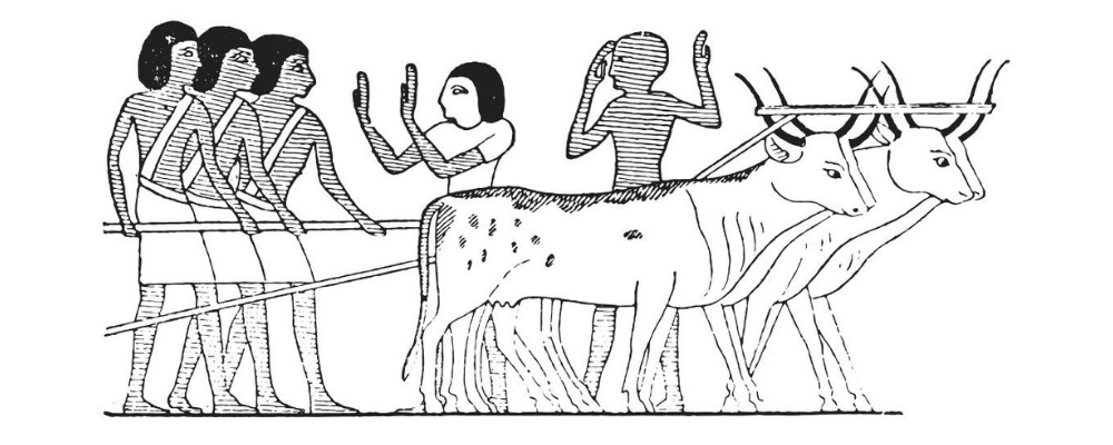 Ancient egyptian illustration ox and harvesting