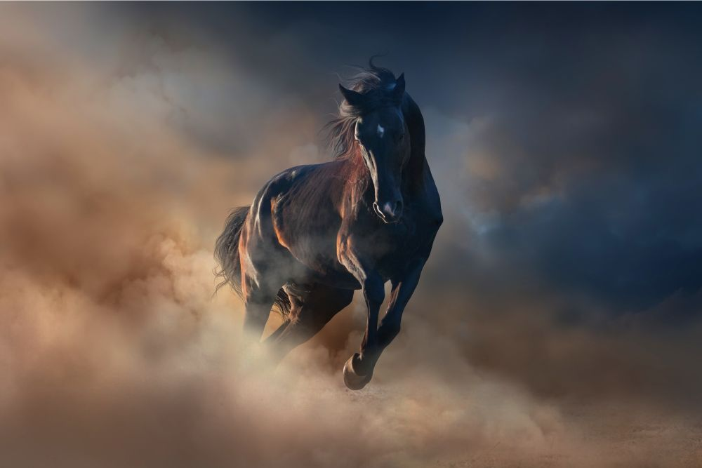 a black stallion surrounded by mist