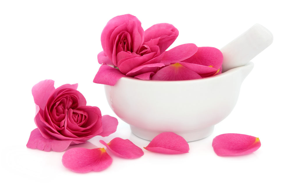 Rose flower petals in a porcelain mortar with pestle and scattered isolatec over white background. Rosa rugosa.